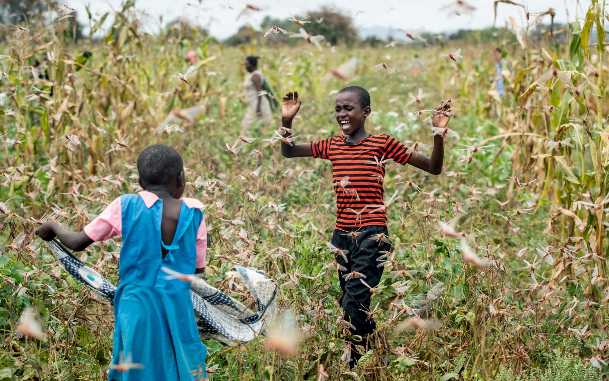 The New Crisis: Locust Swarms in East Africa | Voices of Youth