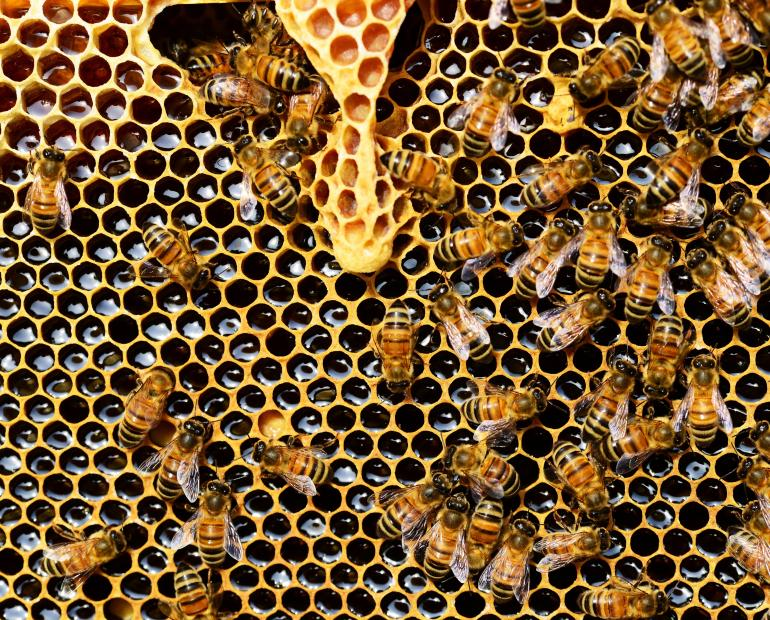 An image of bees.