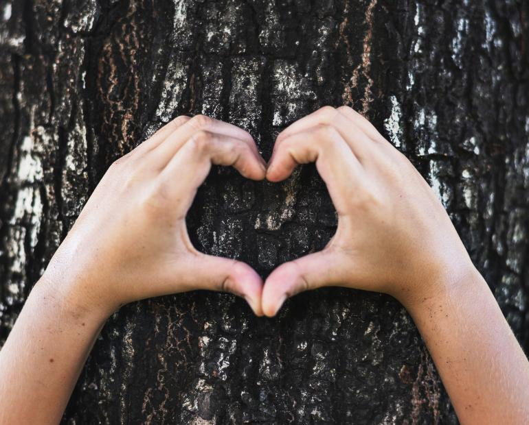 Two hands making a heart shape in front of tree bark