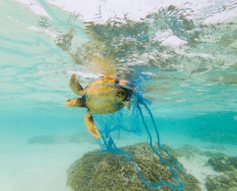 A turtle in the ocean swimming caught in a net.