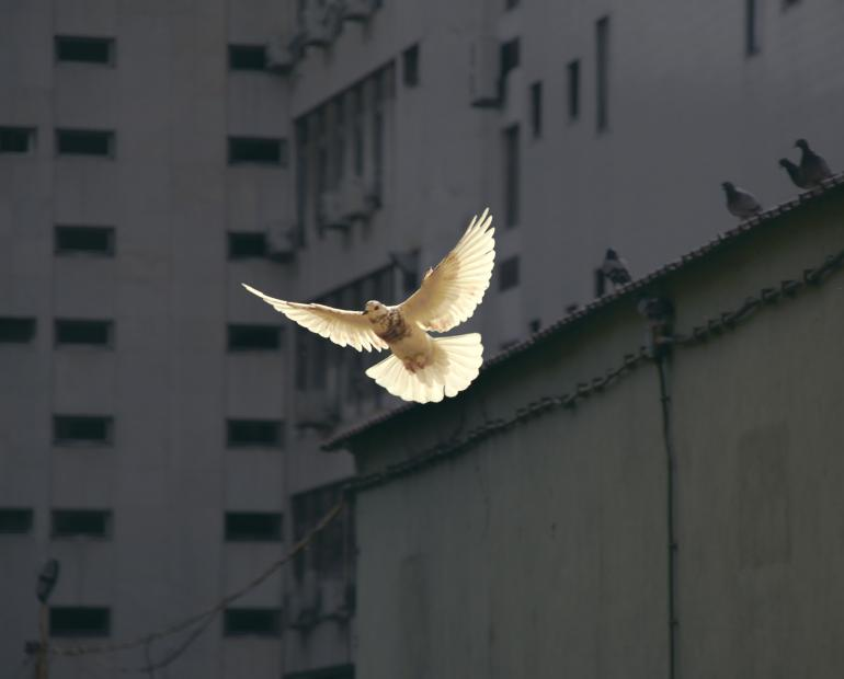 A dove flying representing peace