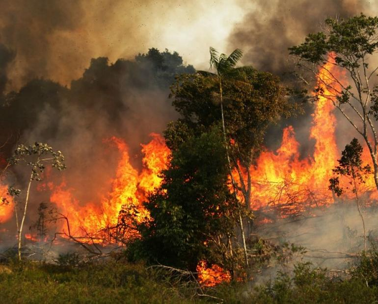 The Amazon Rainforest Burning Down