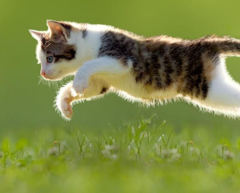A cat running to catch a tiny butturefly