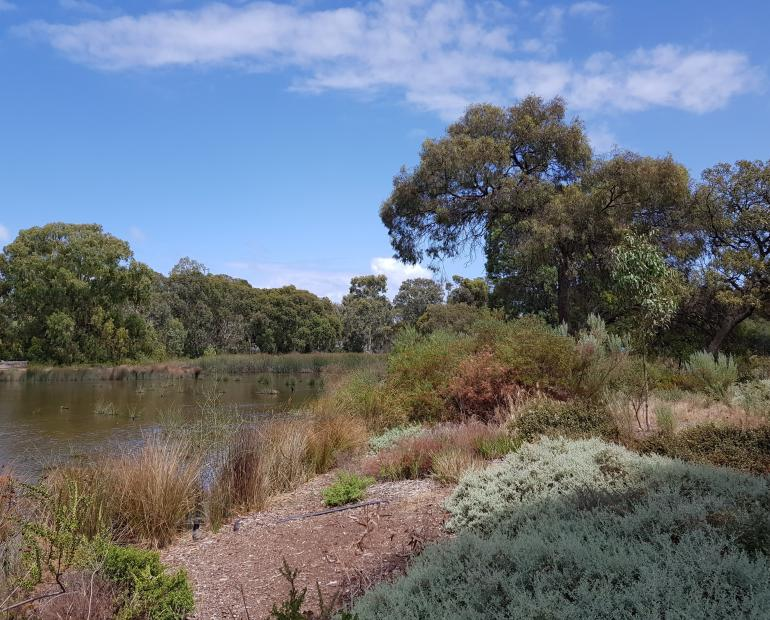 A river/wetland in Southern Australia.