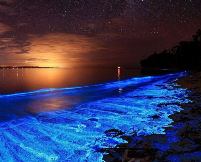 Brightly shining coastline caused by the biolumiescent plankton