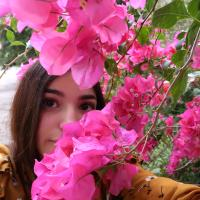Pink flowers and a girl behind them