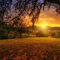 Nature Tree Dawn