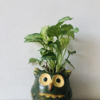 A small owl pot with leaves