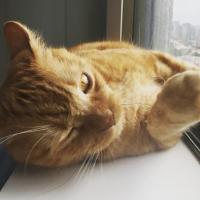 Un gato giñando el ojo