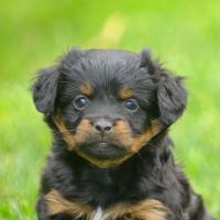 A small puppy in a field of grass.