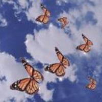 mariposas en una sana libertad