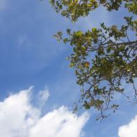 A blue sky with tree branches on the side